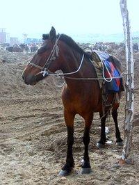 Horse1_1